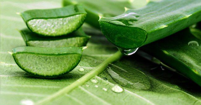 Aloe Vera proprietà: scopri le grandi virtù curative