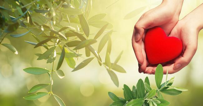 Ipertensione? ti aiutano gli estratti di foglie di ulivo