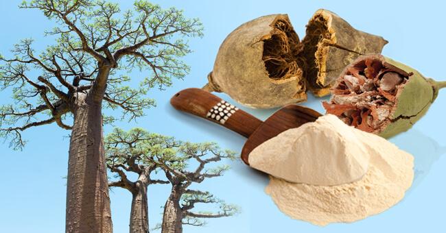 Con il baobab pulisci il colon e dimagrisci
