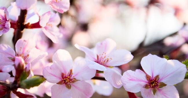 I fiori che fermano il mal di testa