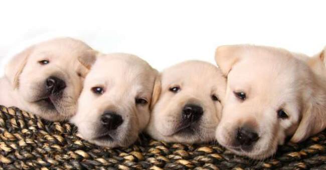 Cani e gatti: come curare i nostri cuccioli