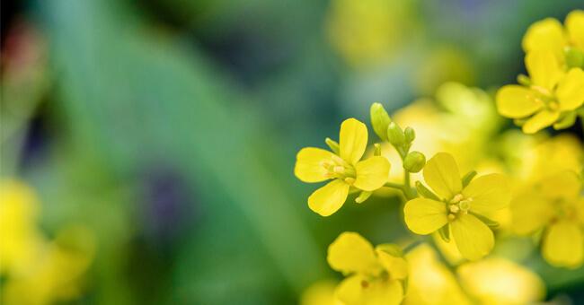 Il fiore di bach contro la depressione autunnale