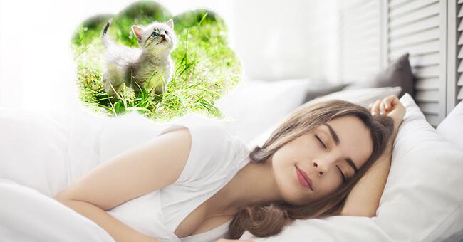 Quando nei sogni compaiono gli animali