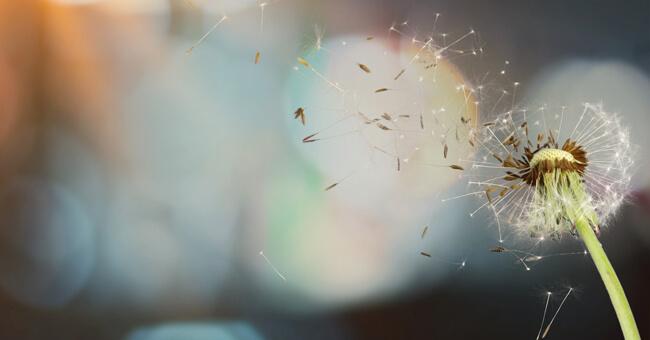 Allergie: conoscerle, prevenirle, combatterle