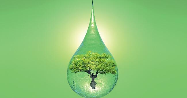 Clorofilla: il carburante che rinnova le cellule