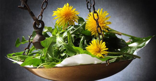 Tarassaco: proprietà e benefici di un'erba dai mille usi