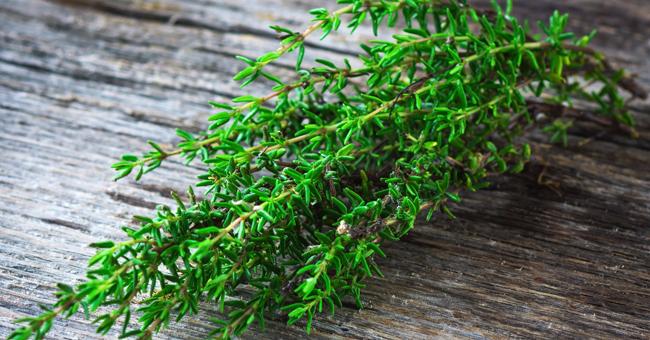 Il timo: l\'erba aromatica ideale per la tua cucina di benessere ...