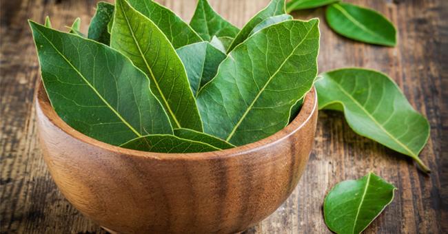 ricetta di foglie di alloro per perdere peso