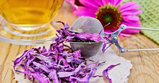 Echinacea: proprietà, benefici, controindicazioni
