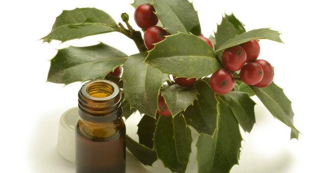 Rusco, il rimedio che protegge vene e microcircolo