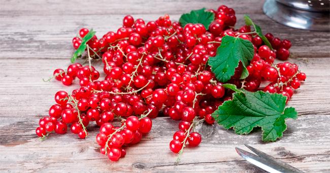 Ribes rosso e timo bianco placano la sofferenza vescicale