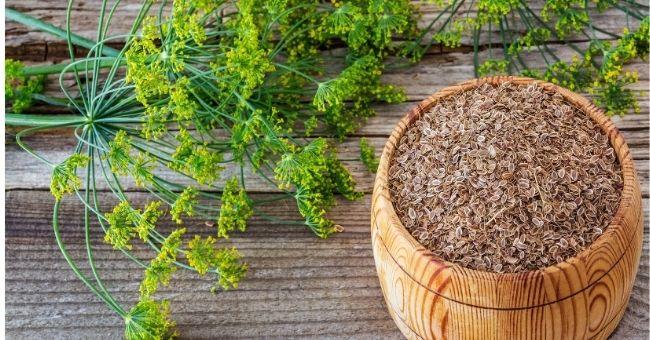 Aneto, l'erba aromatica amica della salute