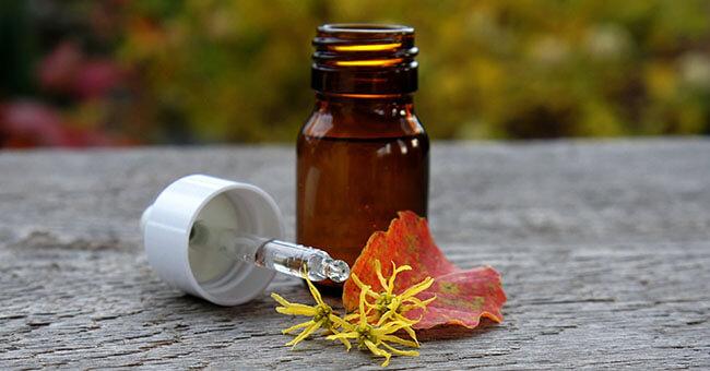Amamelide, il rimedio giusto per la salute di circolazione, vasi sanguigni e cute