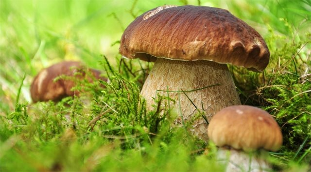 Anticorpi super grazie ai funghi