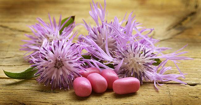 Centaurea: l'alleato della tua digestione
