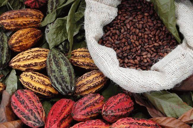 Col cacao addio a colesterolo e adipe