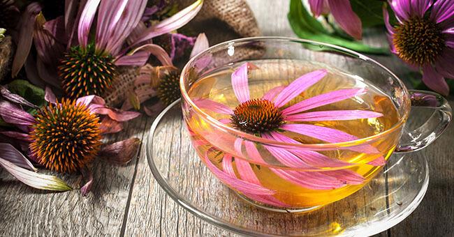 Echinacea, lo scudo più efficace contro il raffreddore