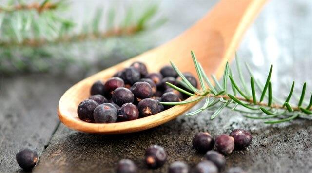 Ginepro, l'aroma antitossine