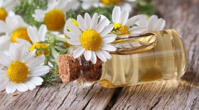 L'olio di camomilla purifica la bile e previene le coliche