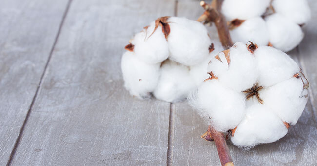 Olio di cotone, l'antiossidante che elimina le rughe