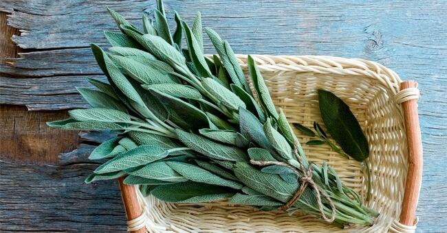 Salvia: quanti benefici in una sola pianta!