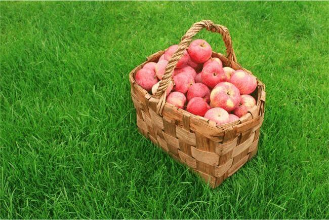 Tutte le proprietà della mela buona e salutare