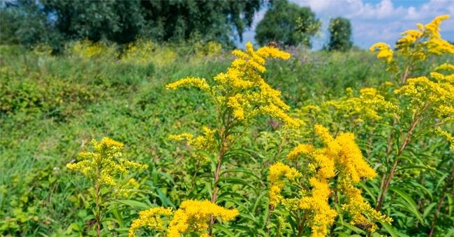 Via le infezioni urinarie con le erbe giuste