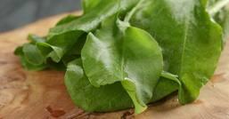 Con le foglie di acetosa ripulisci fegato e reni
