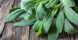 Salvia, la pianta aromatica che scaccia tutti i mali