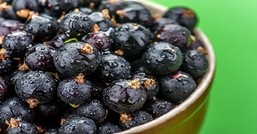 Ribes nigrum, l'alternativa naturale al cortisone