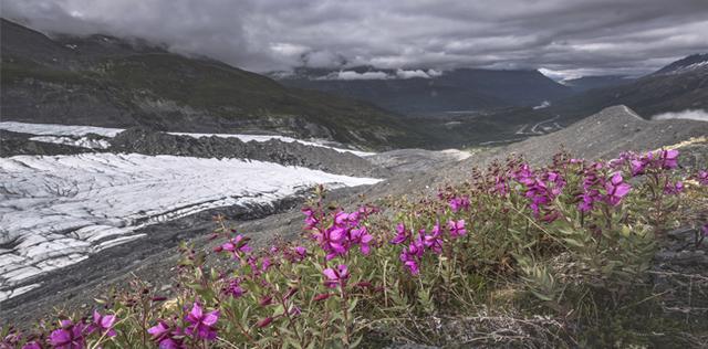I fiori dell'Alaska, ovvero la floriterapia del profondo