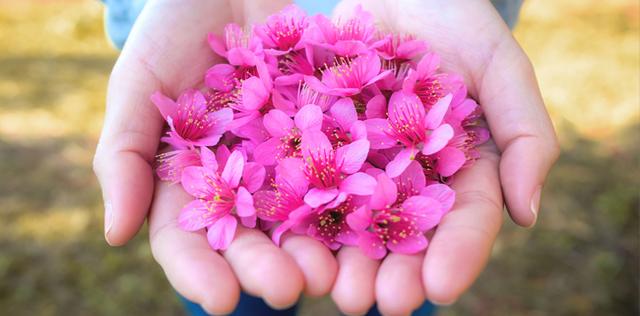 Per il tuo riequilibrio psicofisico, scegli i fiori himalayani