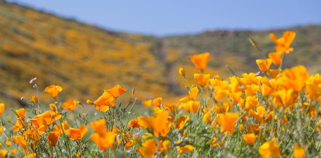 Fiori californiani: elenco e indicazioni per l'autostima e l'armonia dell'Io