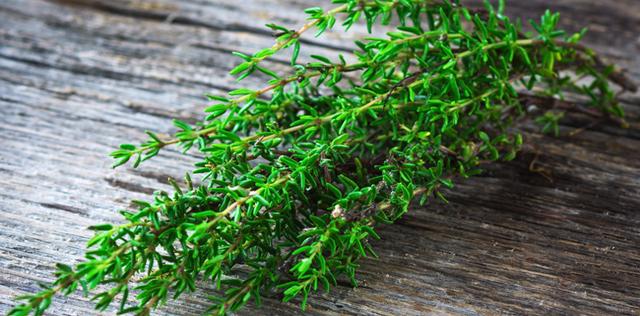 Il timo: l'erba aromatica ideale per la tua cucina di benessere