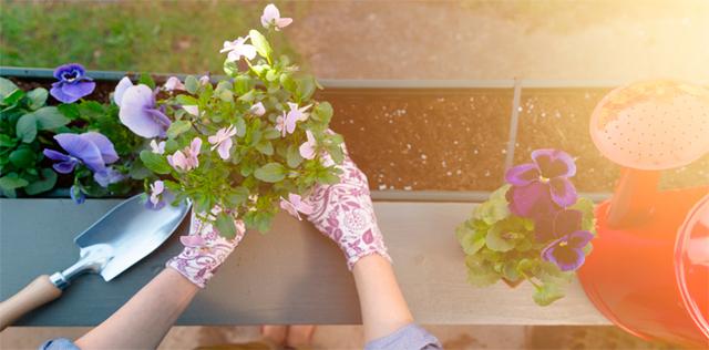 Orto sul balcone: coltiva a casa la tua salute