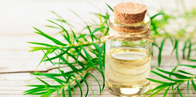 Tea tree oil, il disinfettante verde per le mani e l'aria di casa