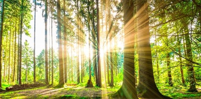 Nel bosco ti ritrovi e sciogli lo stress